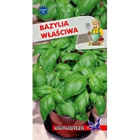 Bazylia zielona 1g