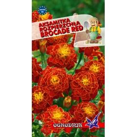 Aksamitka rozpierzchła Red Brocade kol.czerwony 1g