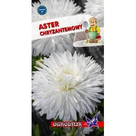 Aster chryzantemowy biały 1g