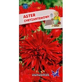 Aster chryzantemowy czerwony 1g