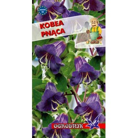 Kobea pnąca kol.fioletowy 6-8z