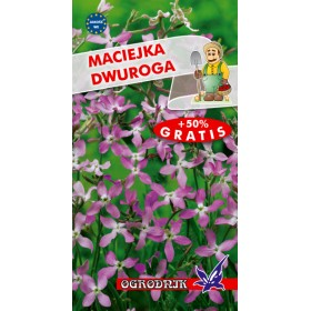 Maciejka dwuroga 2g