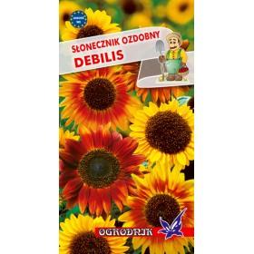 Słonecznik ozdobny Debilis 2g