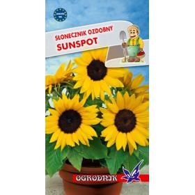Słonecznik ozdobny Sunspot 2g