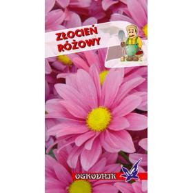 Złocień różowy 1g